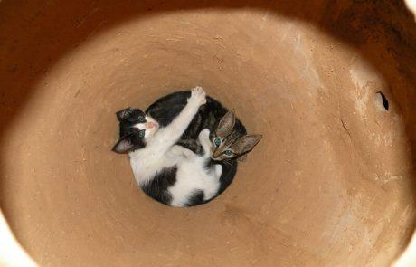 Zwei Katzen in Tongefäss, Hacienda el Dorado