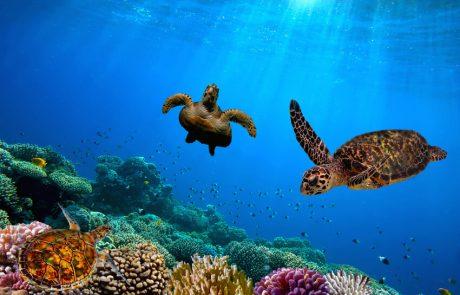 Schildkräten und Korallen in der Unterwasserwelt Galapagos