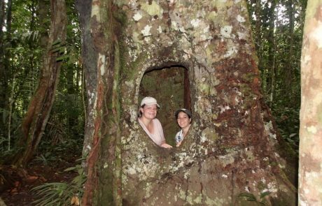 Hohler Baum, Wanderung in Cuyabeno ab der Tapir-Lodge