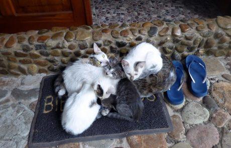 Katzen vor dem Eingang - Hacienda El Dorado, Ecuador