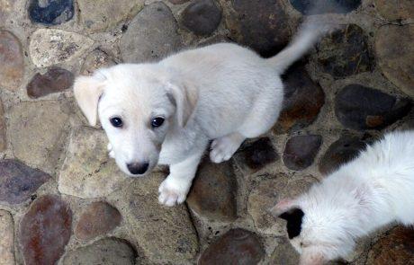 Hundebaby auf der Hacienda El Dorado, Ecuador