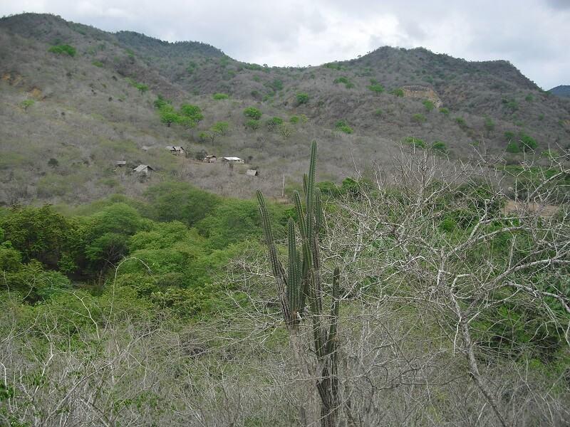 Dry forest of Machalilla national park, Ecuador