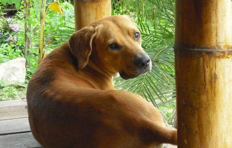 Former guard dog hacienda-eldorado.com Ecuador