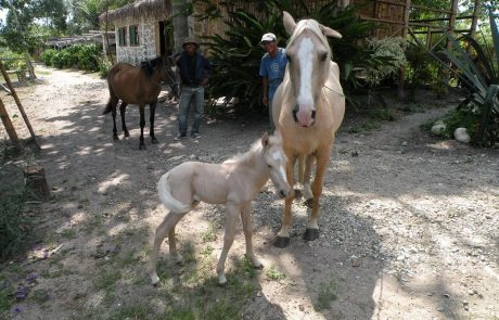 Two horses and a foal at hacienda-eldorado.com