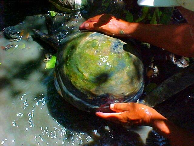 Finding dinosaur eggs, Hacienda El Dorado Ecuador