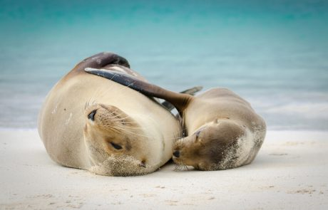 Two sea lions on Galapagos, Ecuador