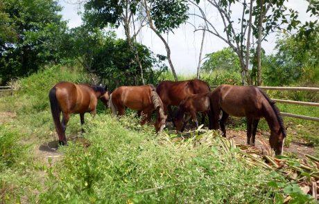 Unos caballos de la hacienda