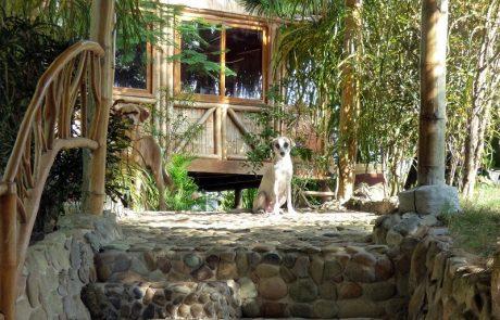 Guard dogs at hacienda-eldorado.com Ecuador