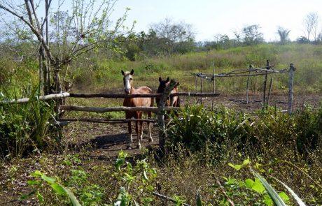 Horse meadow at Hacienda El Dorado Ecuador