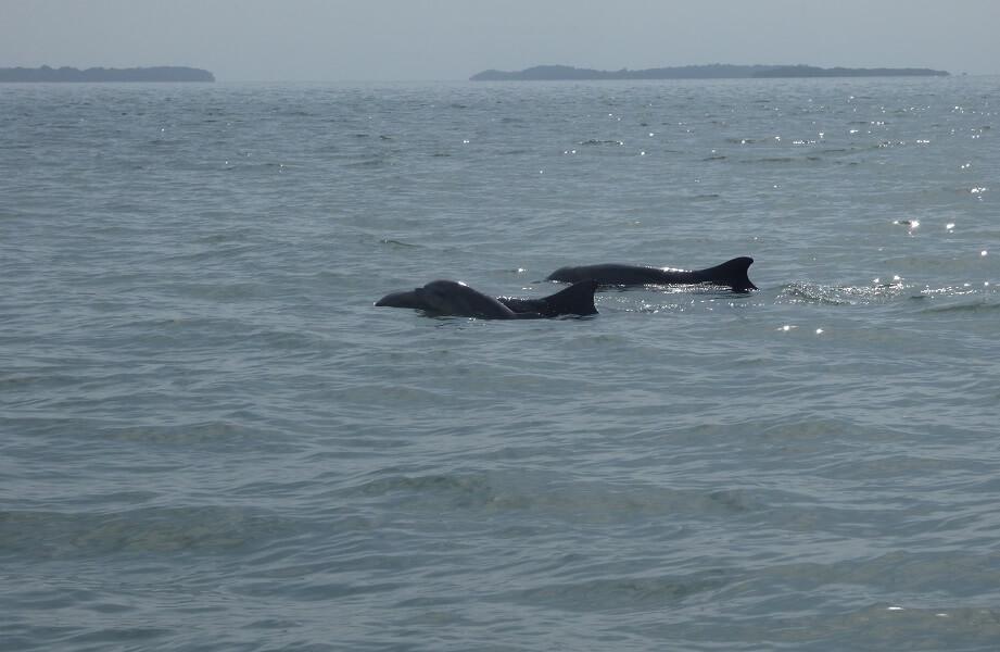 Dolphin Tour hacienda-eldorado.com Ecuador