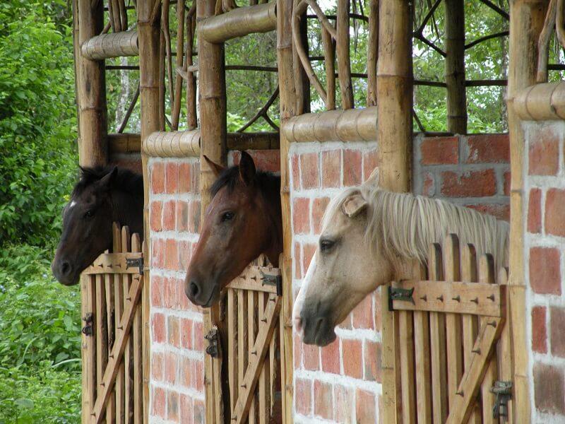 Kleiner Pferdestall Hacienda El Dorado Ecuador