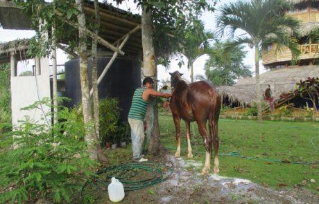 Horse Hacienda El Dorado